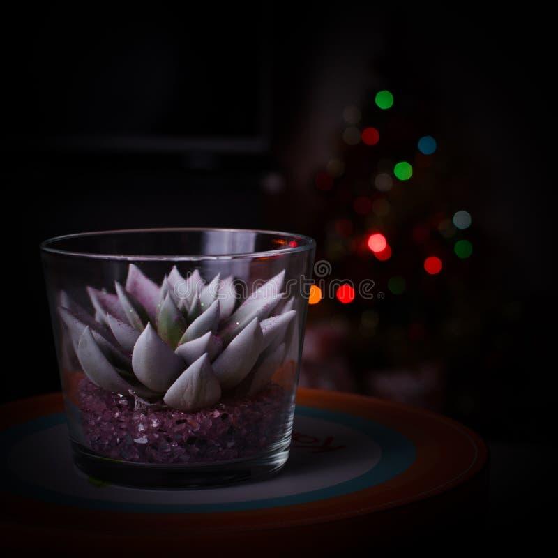 Kaktus in ein Glas und in Christbaumkerzen verwischt lizenzfreie stockfotografie