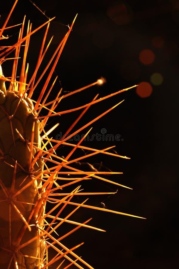 Kaktus För 3 Panelljus Arkivfoton