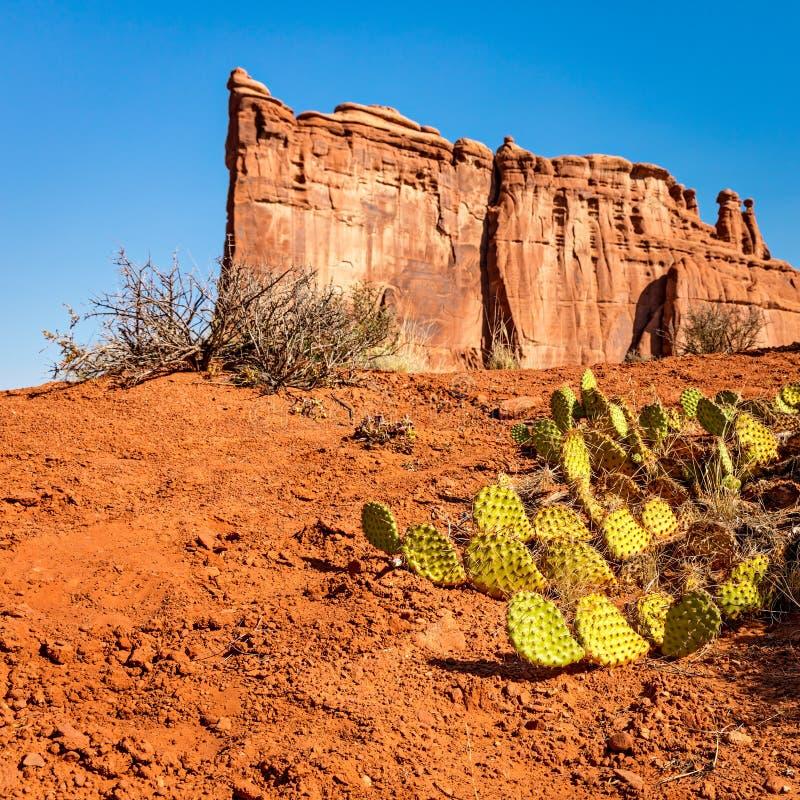 Kaktus för taggigt päron i bågenationalpark royaltyfria bilder