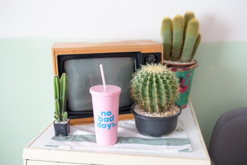 Kaktus, Fernsehen und Plastikglas lizenzfreie stockbilder
