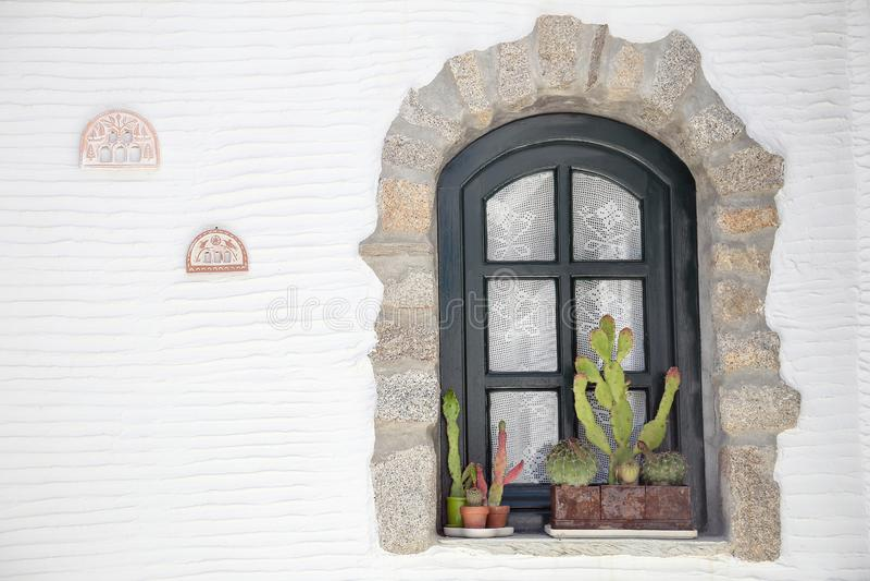 Kaktus framme av ett fönster royaltyfri foto