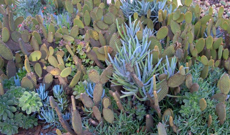 Kaktus-Garten lizenzfreie stockfotos