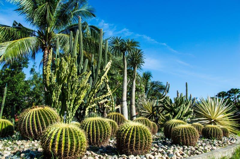 Kaktus-Garten im Hintergrund stockfoto