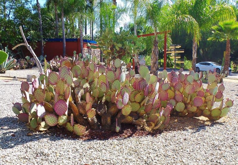 Kaktus-Garten - Wasserreinhaltung lizenzfreies stockbild