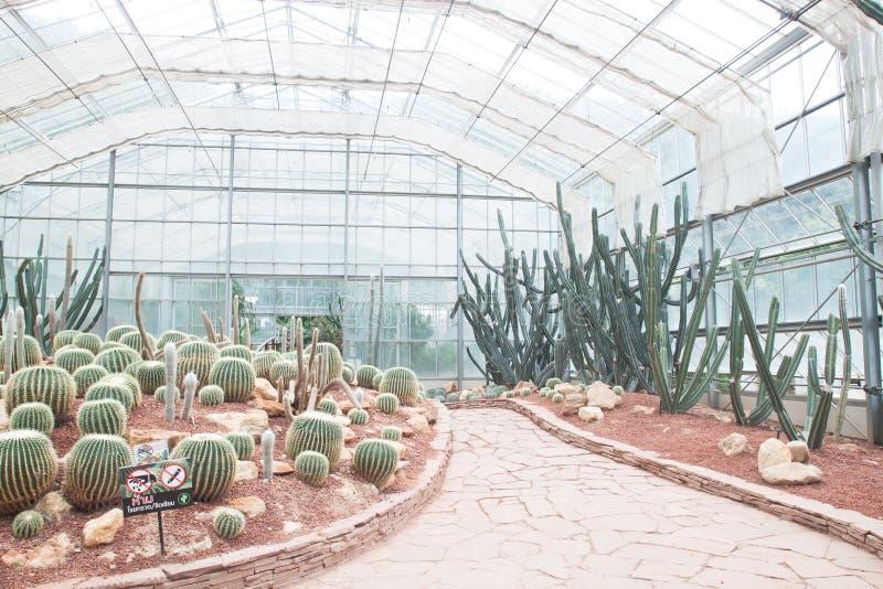 Kaktus i botaniska trädgården för drottning Sirikit, Chiangmai Thailand arkivfoto