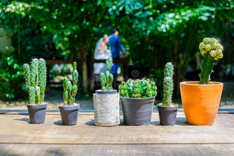 Kaktus i en kruka som förläggas på en tabell som göras av trä arkivfoto