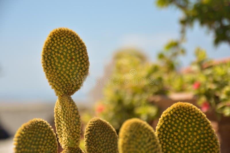 Kaktus i Frankrike fotografering för bildbyråer