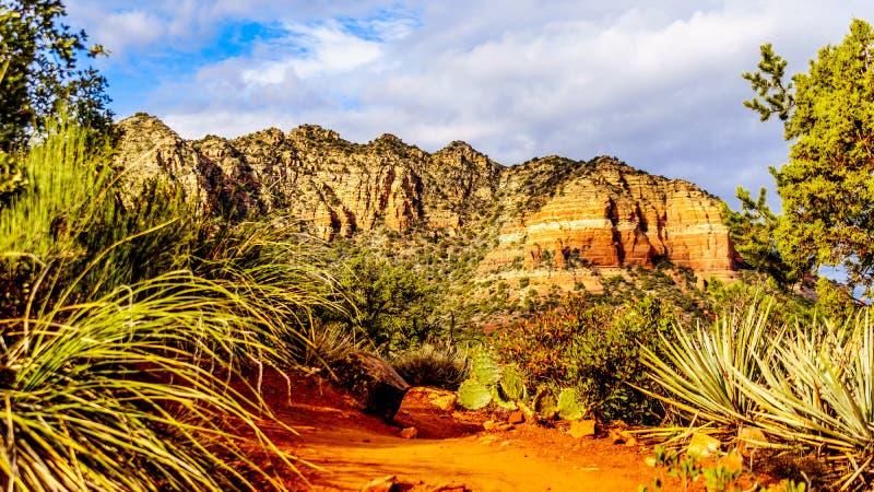Kaktus i inna roślinność na czerwonych skałach Coconino las państwowy z tłem, w kolorowa katedry skała zdjęcie royalty free