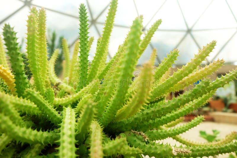 Kaktus i kamienie W pustyni zdjęcie stock
