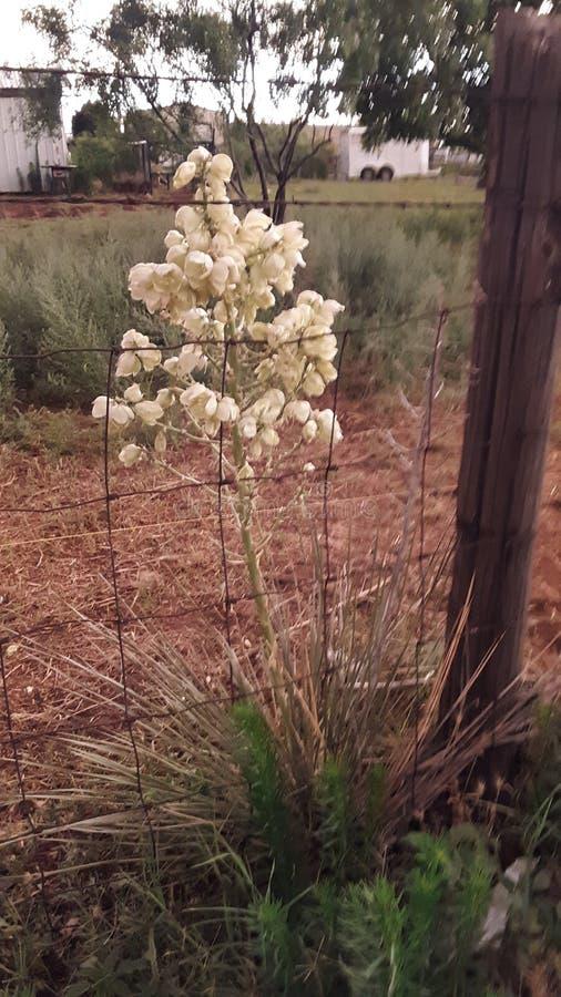 Kaktus i min tr?dg?rd royaltyfri bild