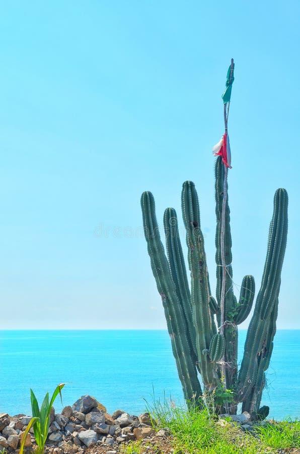 Kaktus i morze obraz royalty free