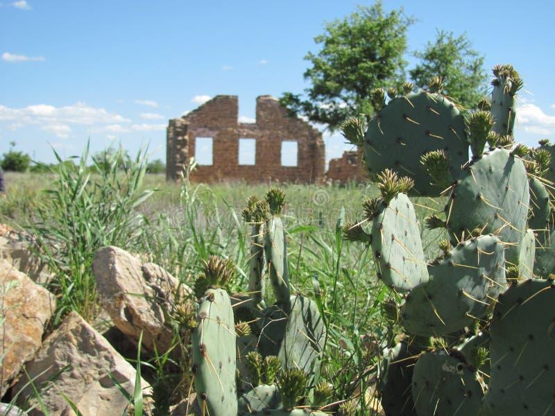 Kaktus i ruiny w Teksas zdjęcia stock