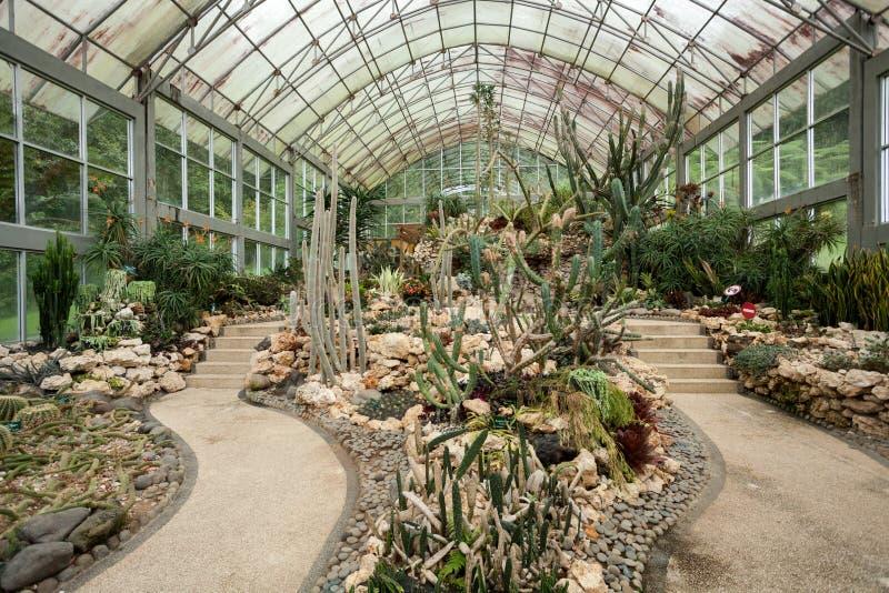Kaktus i tłustoszowata roślina wśrodku szklarni z szkło dachem obrazy royalty free