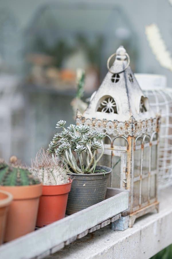 kaktus Kaktus i växtkrukan, utomhus- trädgård Mjuk fokus av t royaltyfria bilder