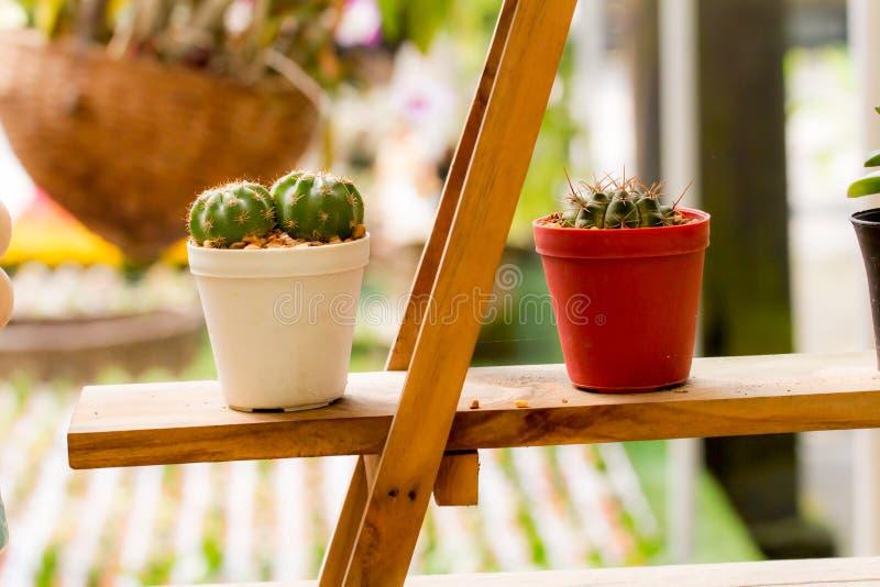 Kaktus i vita och röda krukor på hyllor royaltyfri fotografi