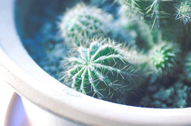 Kaktus im Blumentopf lizenzfreie stockbilder