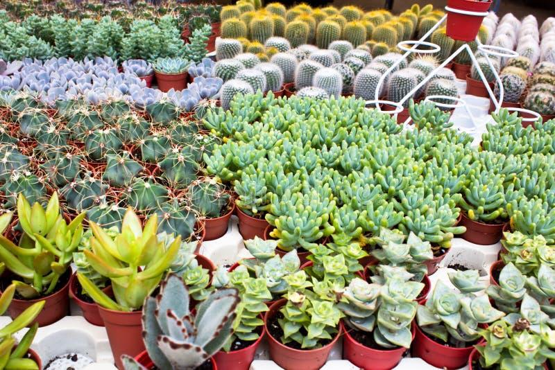 Kaktus im Garten lizenzfreies stockfoto