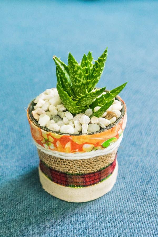 Kaktus im kleinen Topf des handgemachten Topfes für Ausgangs- oder Bürodekoration stockbild
