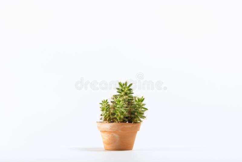 Kaktus im Tongef?? lizenzfreies stockfoto