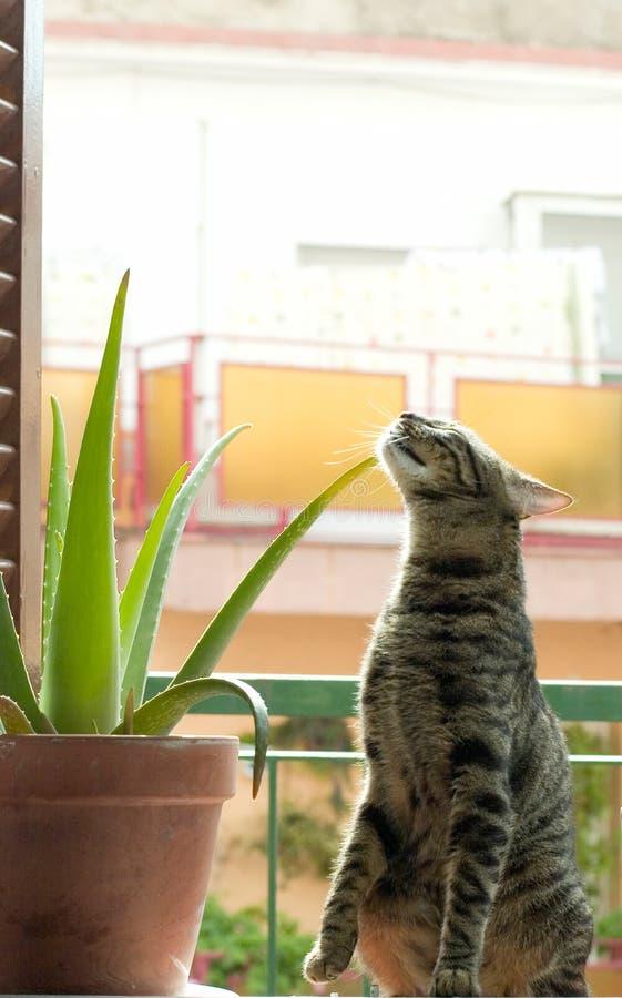 kaktus kot zdjęcie royalty free