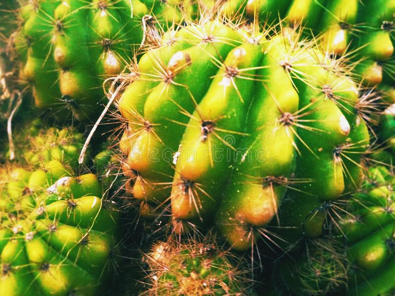 Kaktus Man*; - _-&x27; * schöner Dorn HAHAHA lizenzfreies stockfoto
