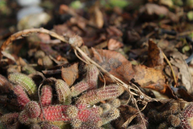 Kaktus in meinem Biogarten lizenzfreies stockbild