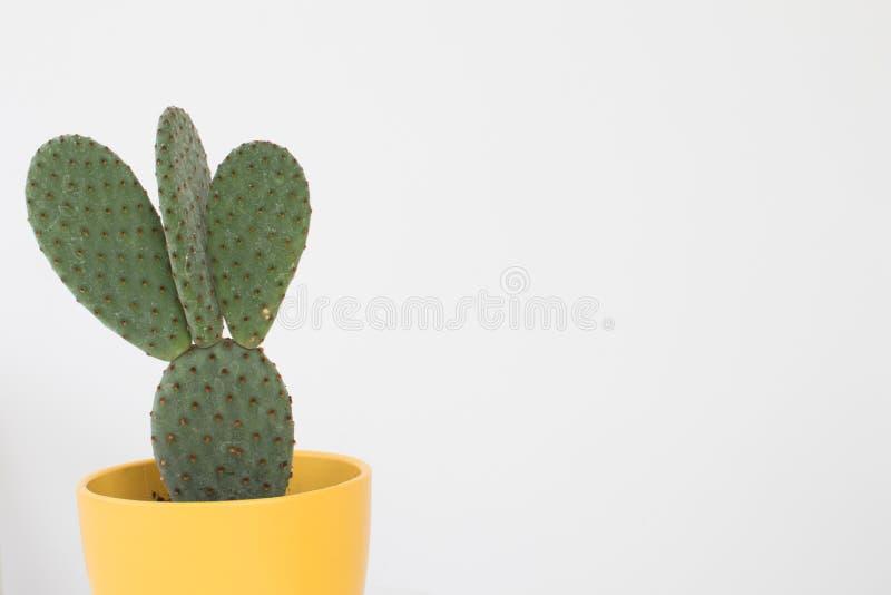 Kaktus mit Schaufelblättern und -dornen in einem gelben Kasten auf einem Weiß lizenzfreies stockfoto