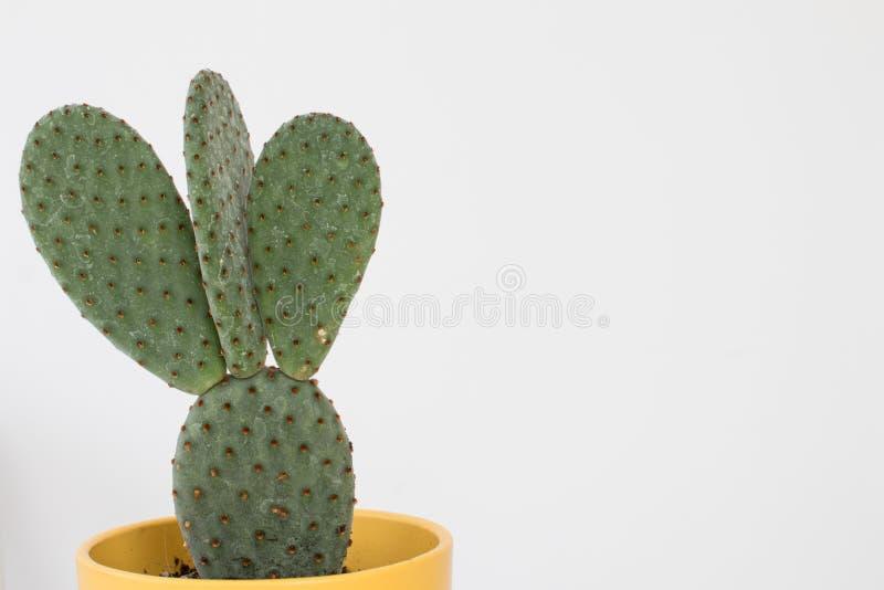 Kaktus mit Schaufelblättern und -dornen in einem gelben Kasten auf einem Weiß lizenzfreie stockfotografie