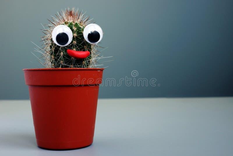 Kaktus mit Spielzeugaugen als Gesicht Sonderbarer lustiger Hintergrund stockfotos