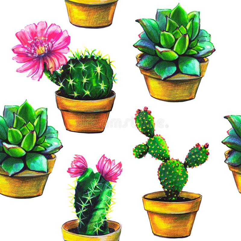 Kaktus modell, uppsättning av suckulenten som isoleras på en vit vektor illustrationer