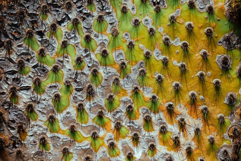 Kaktus nagelt Nahaufnahme, exotischen Garten von Eze, französisches Riviera fest lizenzfreie stockbilder