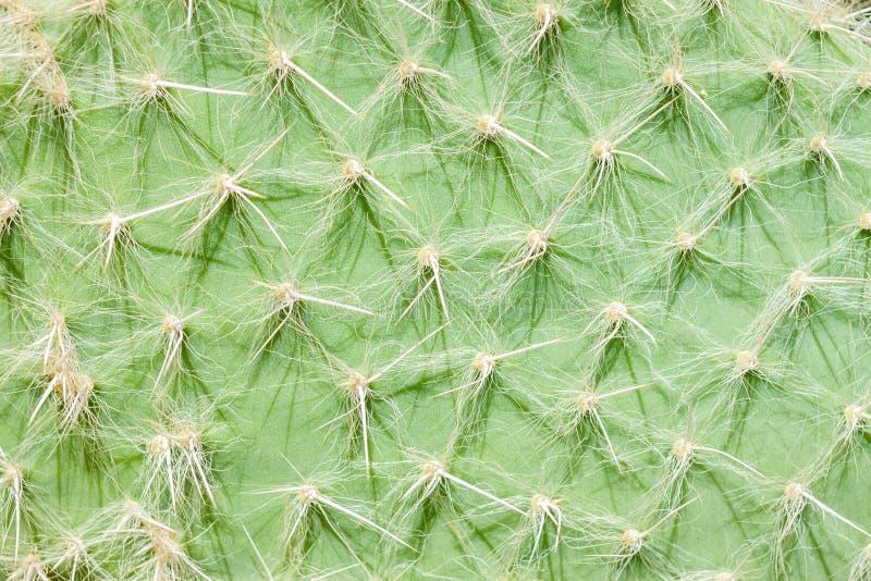 Kaktus nawierzchniowa tekstura obrazy royalty free