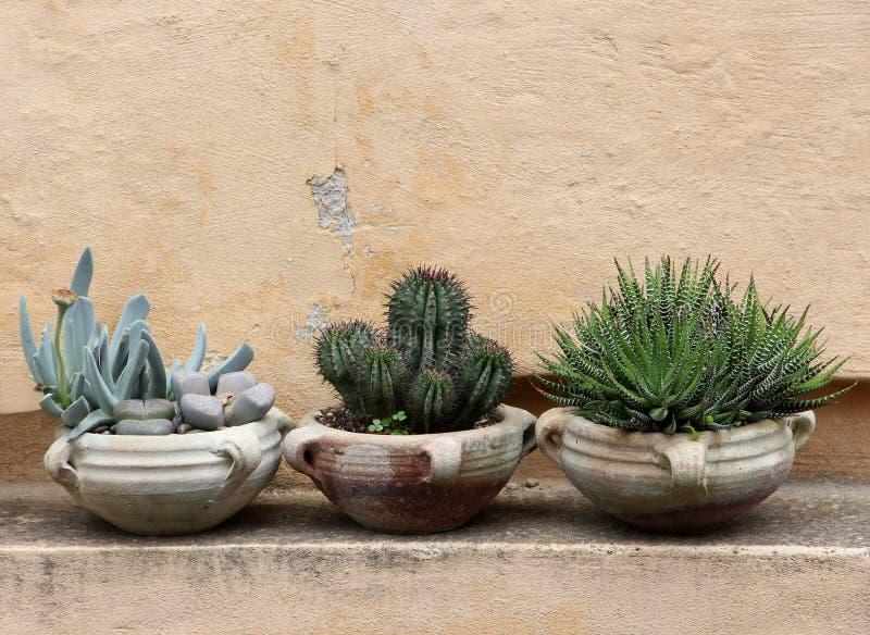 Kaktus och suckulenter i terrakottakrus royaltyfria bilder