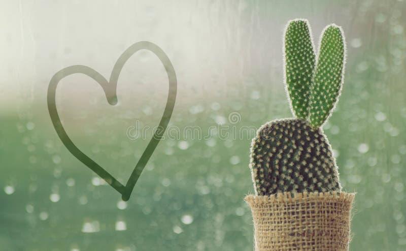 Kaktus på en regnig dag med handskrifthjärtaform på vattendroppe på fönsterbakgrund droppar av regn på bakgrund för fönsterexpone royaltyfria foton
