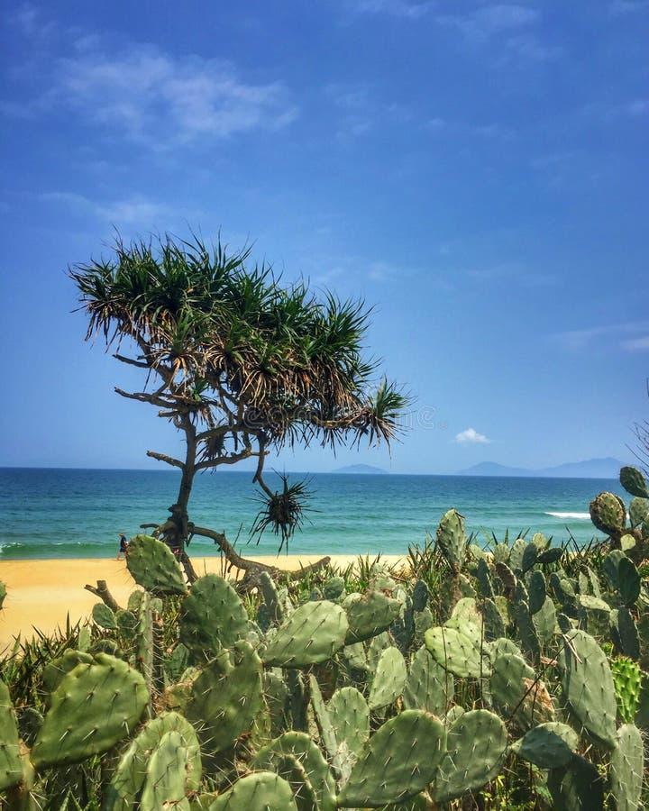 Kaktus på en strand royaltyfri fotografi