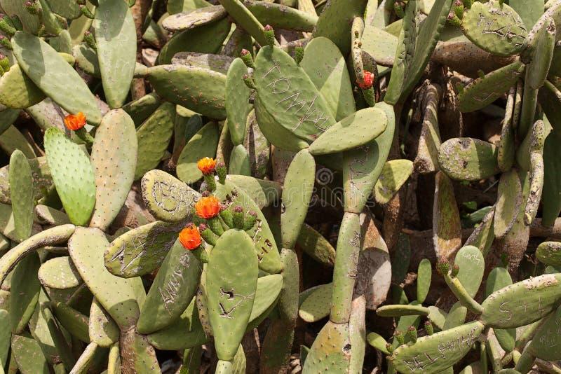 Kaktus-Park Guell stockbilder