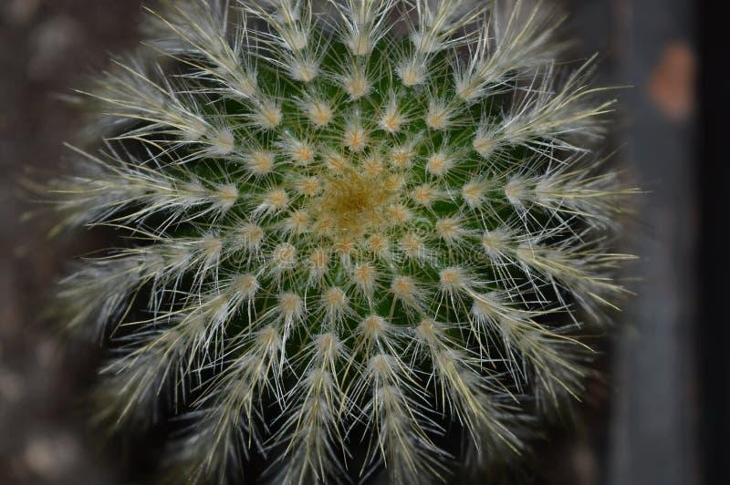 Kaktus przeglądać od up above obraz stock