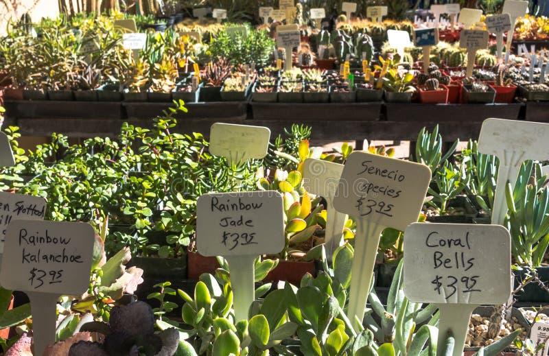 Kaktus przy rośliny sprzedażą zdjęcia stock