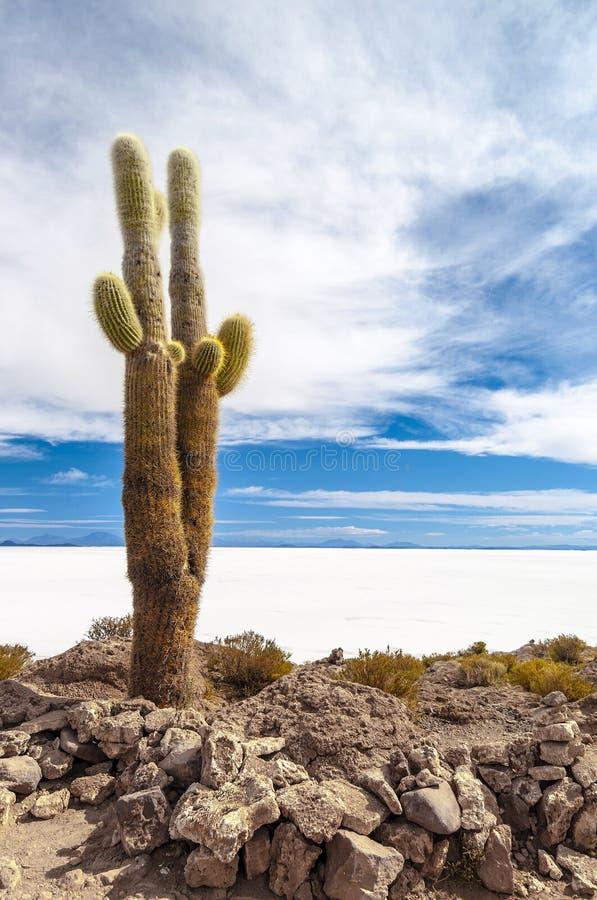 Kaktus in Salar de Uyuni lizenzfreie stockfotos
