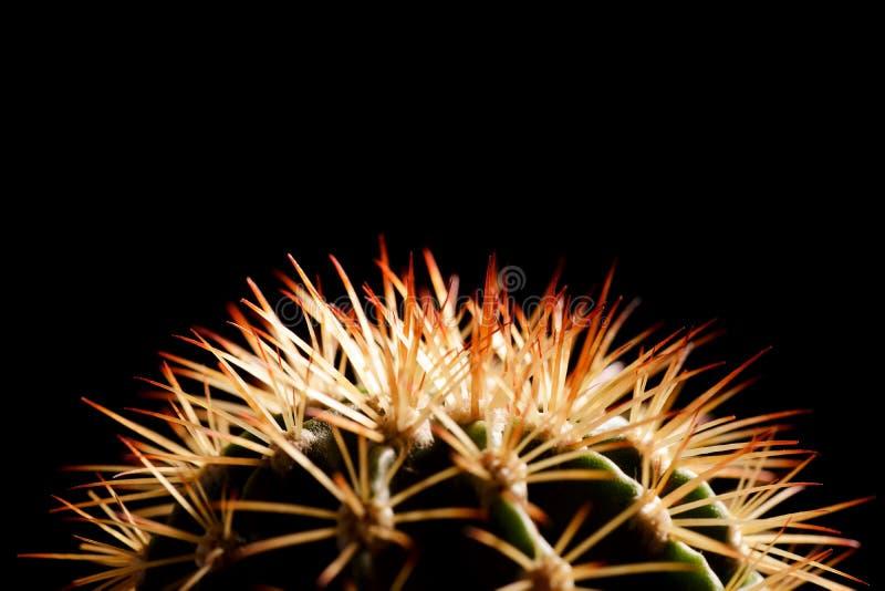 Kaktus-Schattenbild stockfotografie