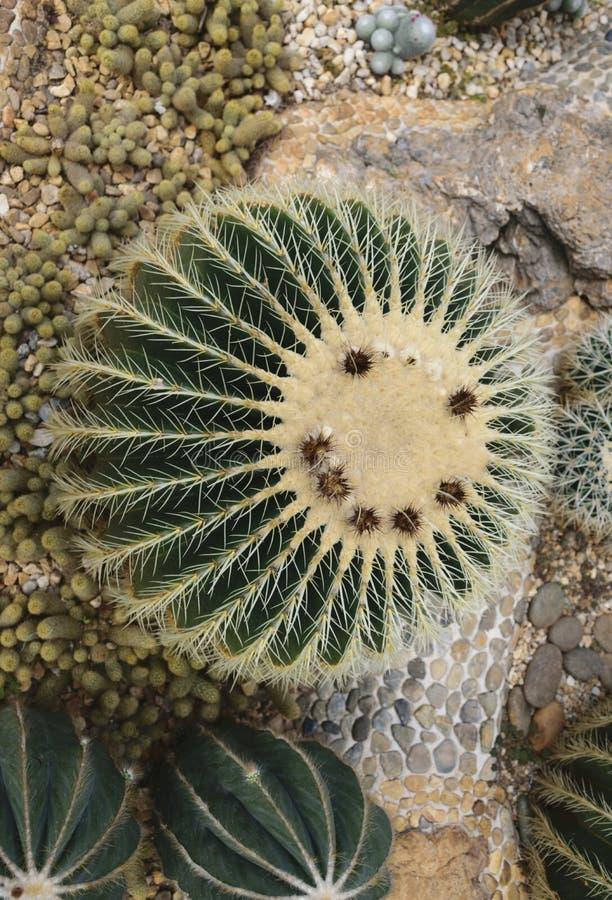Kaktus-smiley stockfotos