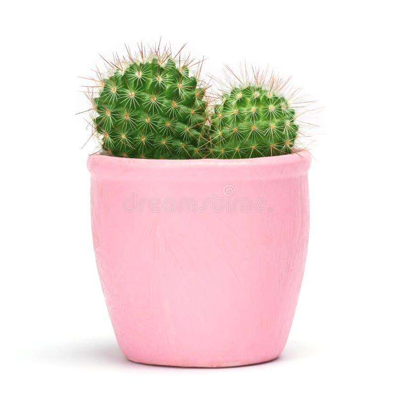 Kaktus som isoleras med den snabba banan Främre sikt för Closeupkakturs i rosa keramisk krukavitbakgrund Samling royaltyfria bilder