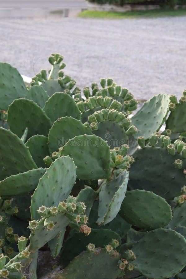 Kaktus am Strand lizenzfreie stockbilder