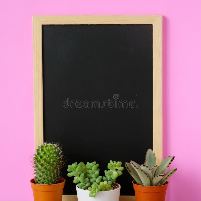 Kaktus, sukulent rośliny i pusty rocznika chalkboard na różowych półdupkach, zdjęcie royalty free