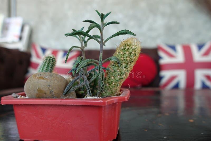 Kaktus- und Union- Jackflagge und rotes Herzkissen auf braunem Sofa, Kissendekorationsgegenstand, England-Flagge auf Gegenstandge stockbild