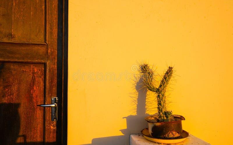 Kaktus w garnku na wypuscie ciska cień na ścianie starym drewnianym drzwi obraz stock