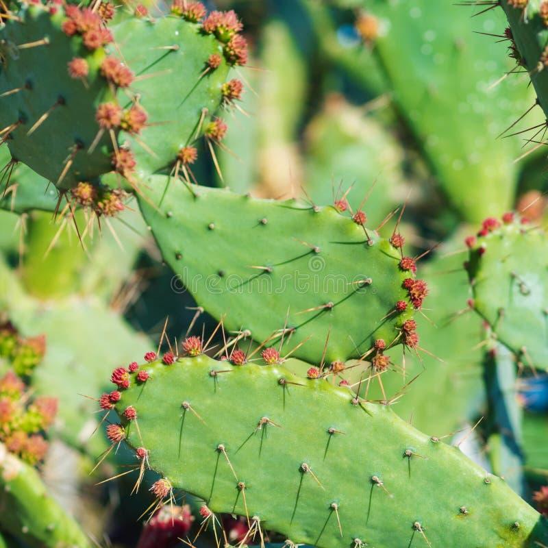 Kaktus w ogródzie z kwiatami i cierniami zdjęcia royalty free