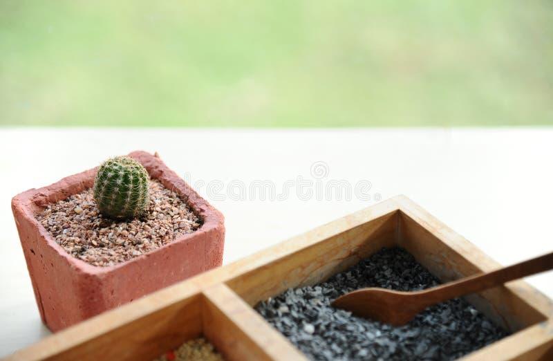 Kaktus w, pył dla tworzyć pięknego roślina garnek lub fotografia royalty free