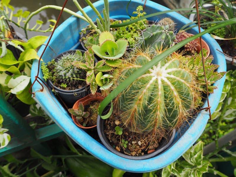 kaktus w selekcyjnej ostrości obrazy royalty free