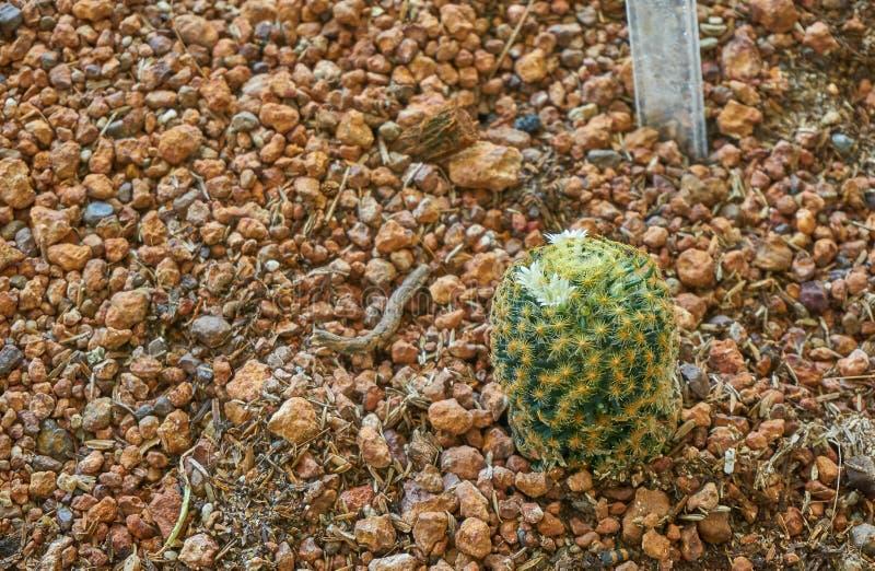 kaktusa botaniczny ogród zdjęcia stock